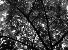 Solsticio (2005), Lambda Print 30 x 40 in. sitios cosas gente (2006) - Exhibición fotográfica por Tristán Reyes